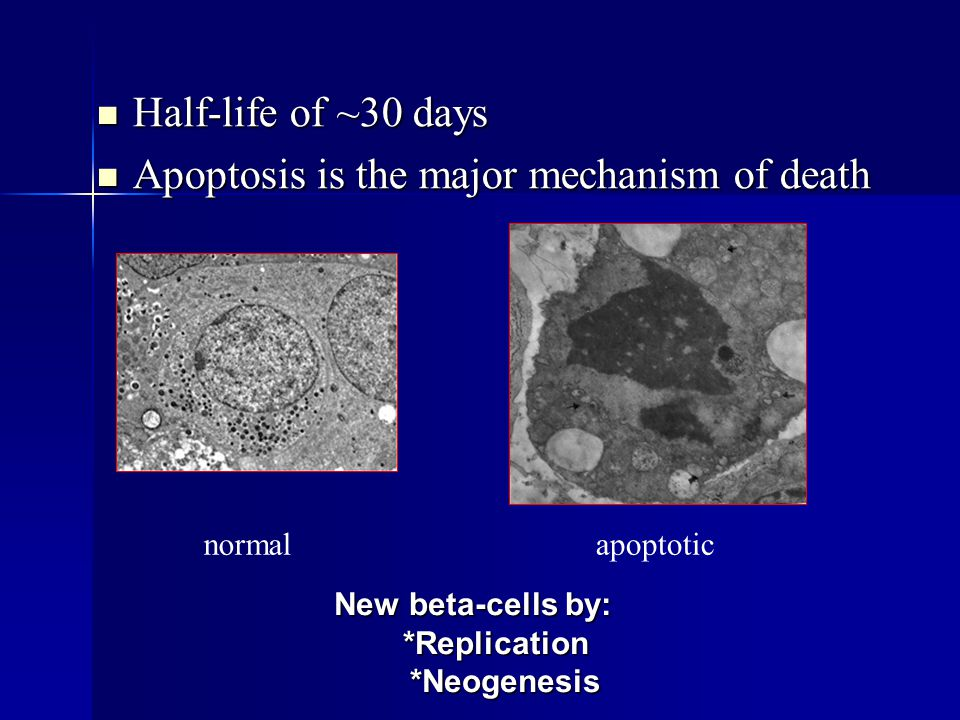 Apoptosis is the major mechanism of death