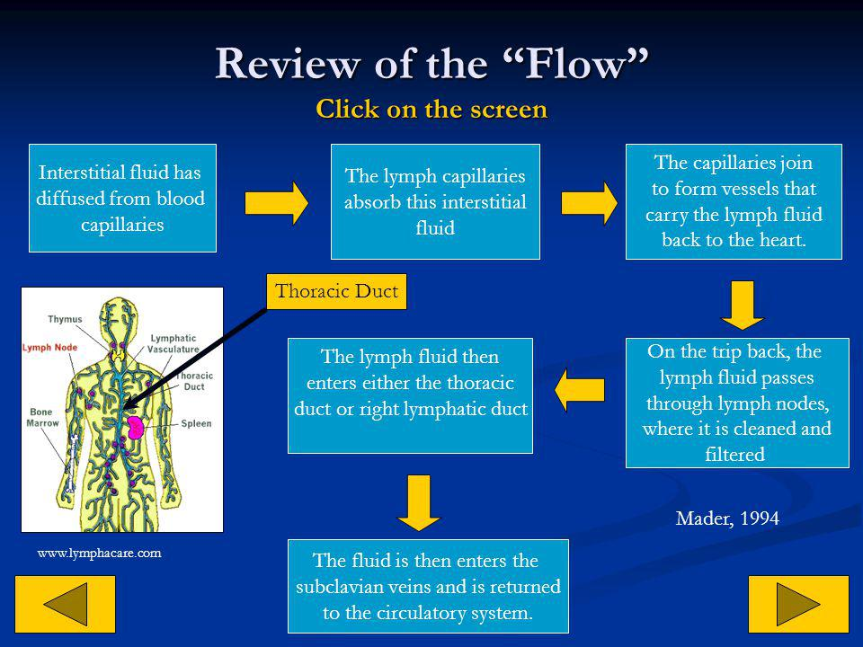 Review of the Flow Click on the screen
