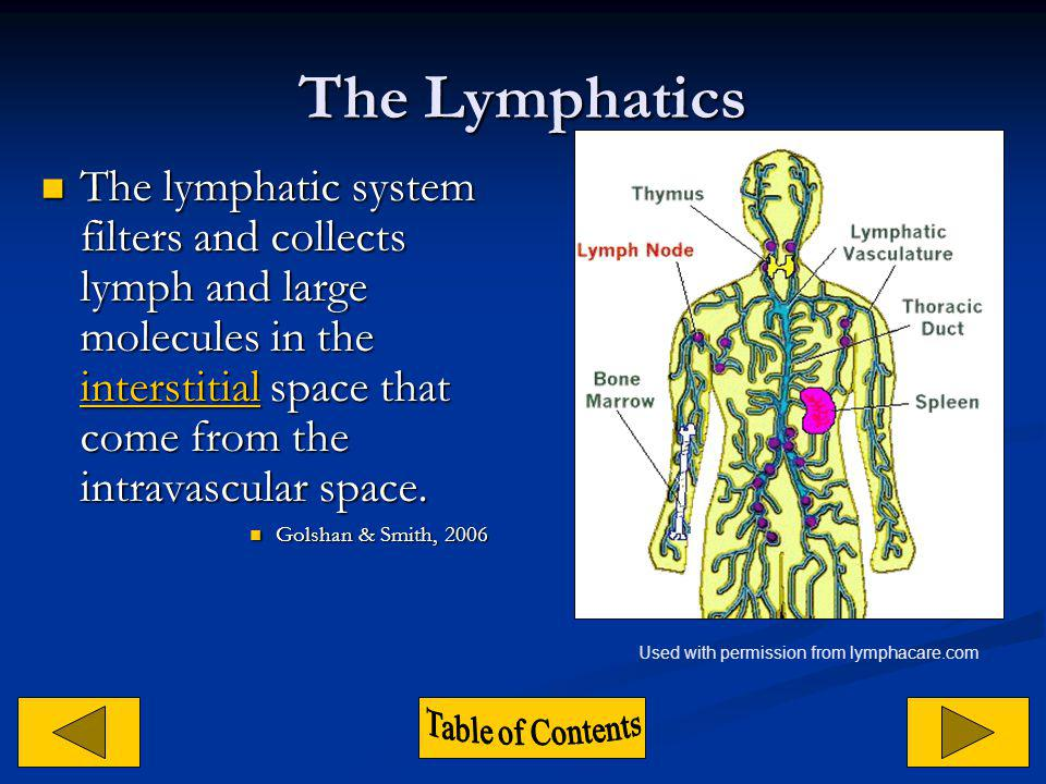 The Lymphatics The lymphatic system filters and collects lymph and large molecules in the interstitial space that come from the intravascular space.