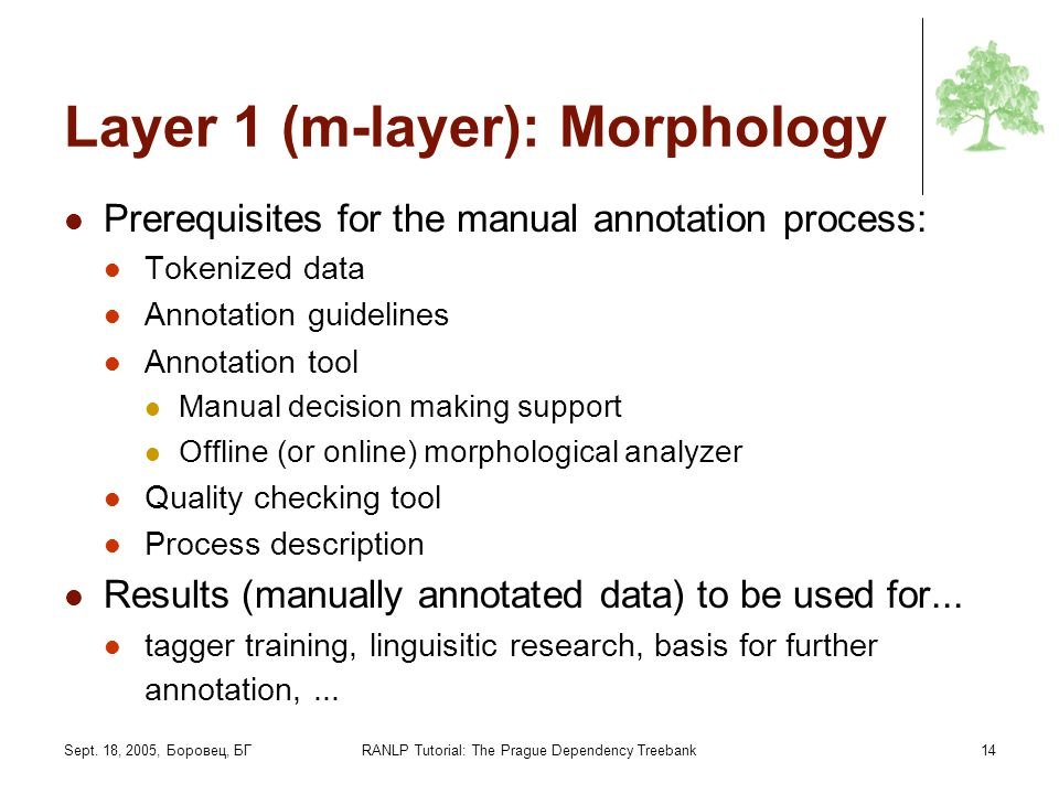 Layer 1 (m-layer): Morphology
