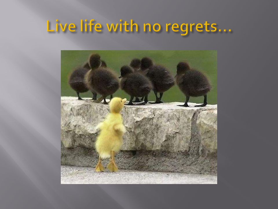 Live life with no regrets…