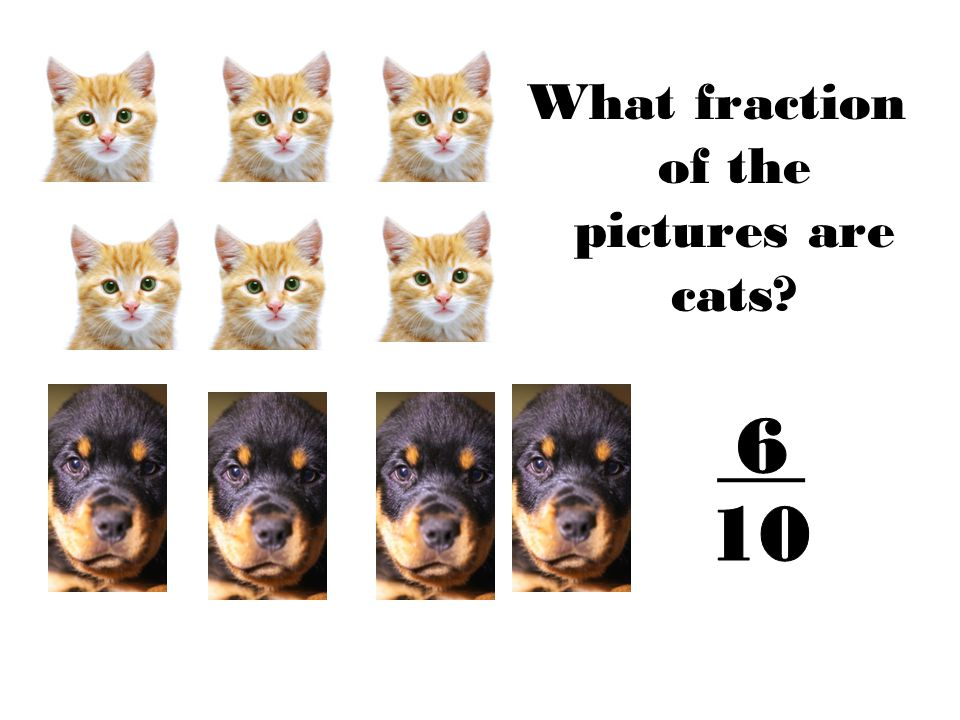 What fraction of the pictures are cats