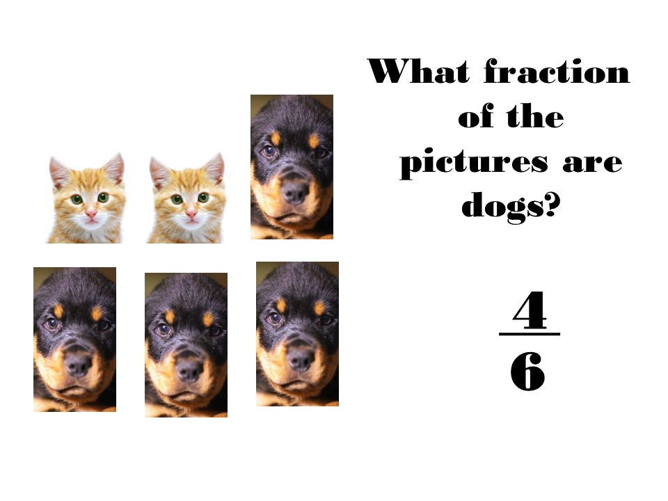 What fraction of the pictures are dogs
