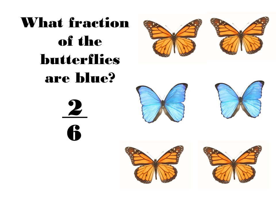 What fraction of the butterflies are blue