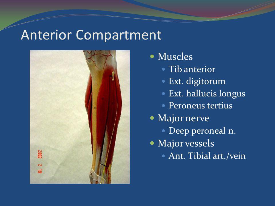 Anterior Compartment Muscles Major nerve Major vessels Tib anterior