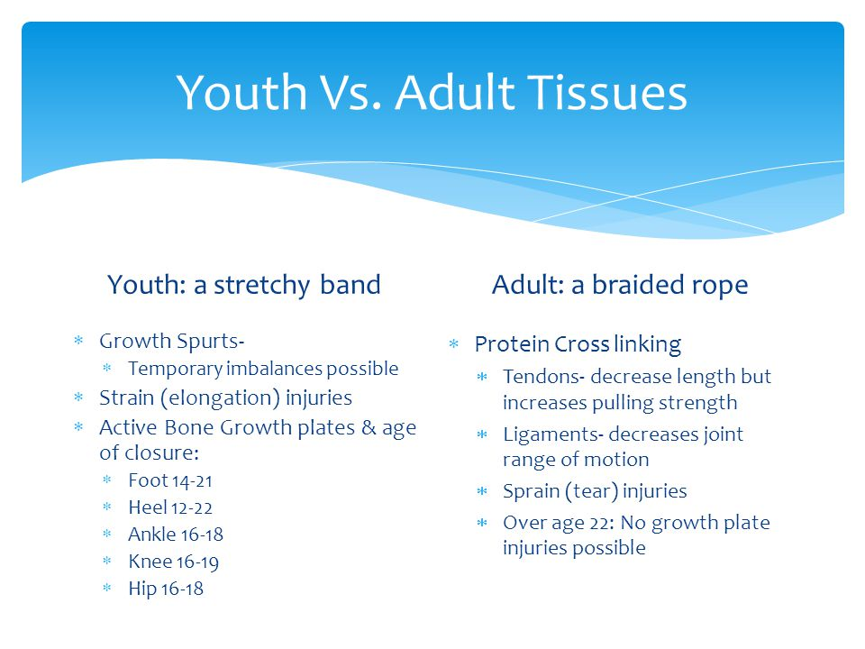 Youth Vs. Adult Tissues Youth: a stretchy band Adult: a braided rope