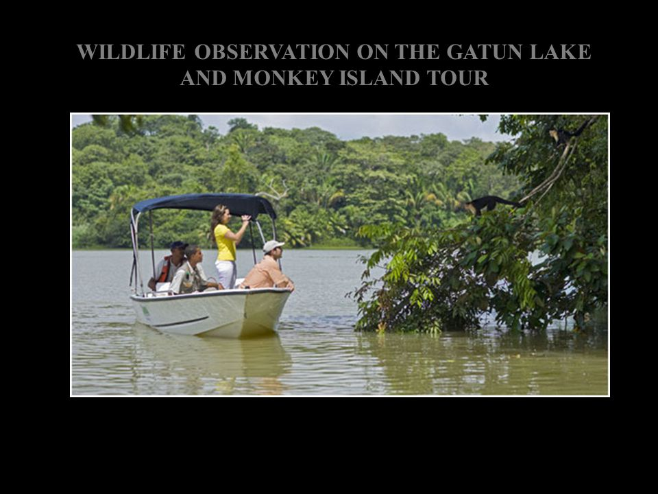 WILDLIFE OBSERVATION ON THE GATUN LAKE AND MONKEY ISLAND TOUR