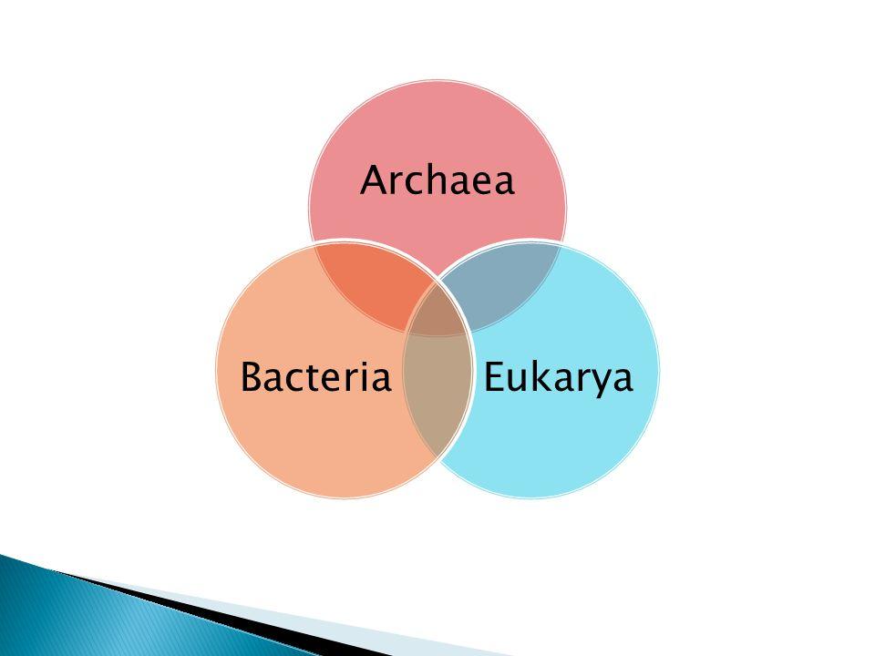 Archaea Eukarya Bacteria
