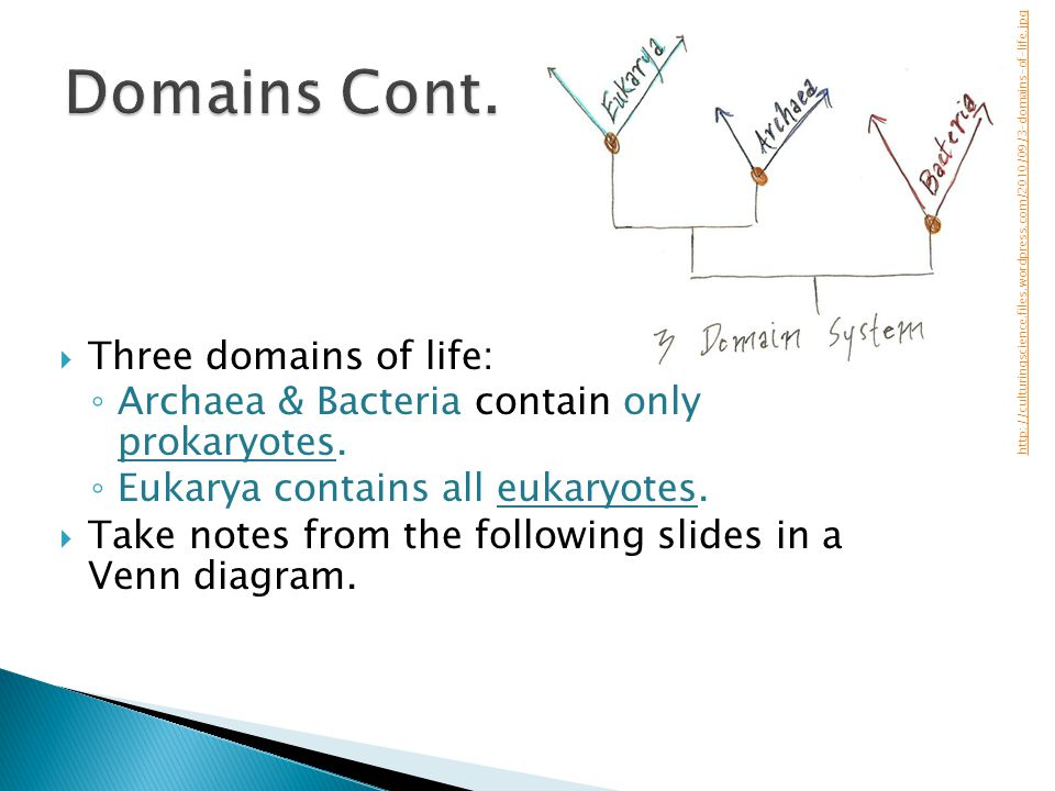 Domains Cont. Three domains of life: