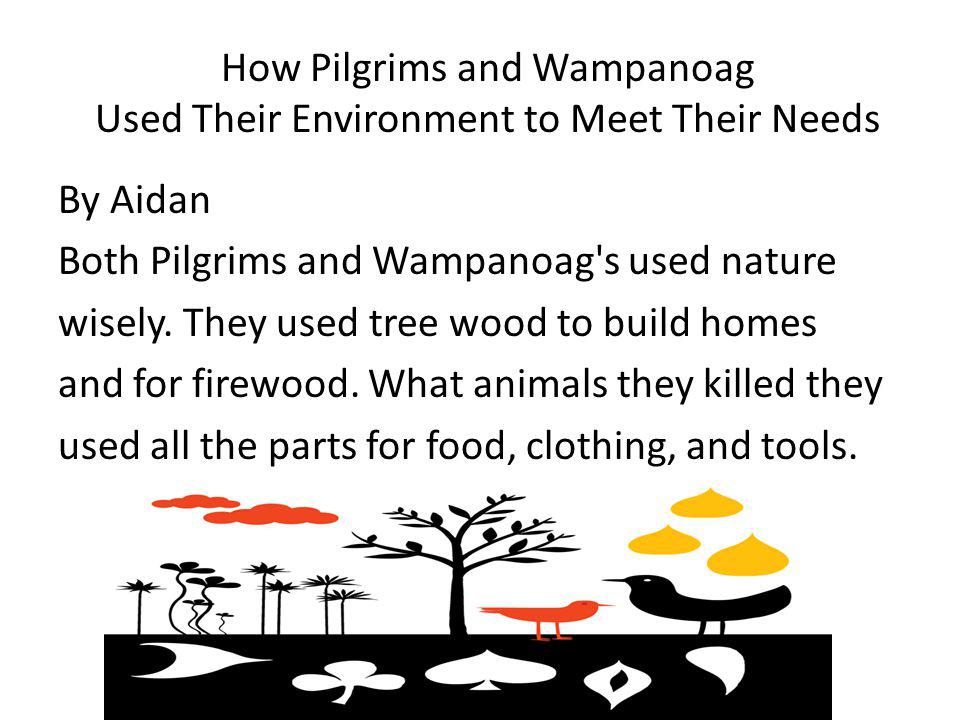 How Pilgrims and Wampanoag Used Their Environment to Meet Their Needs