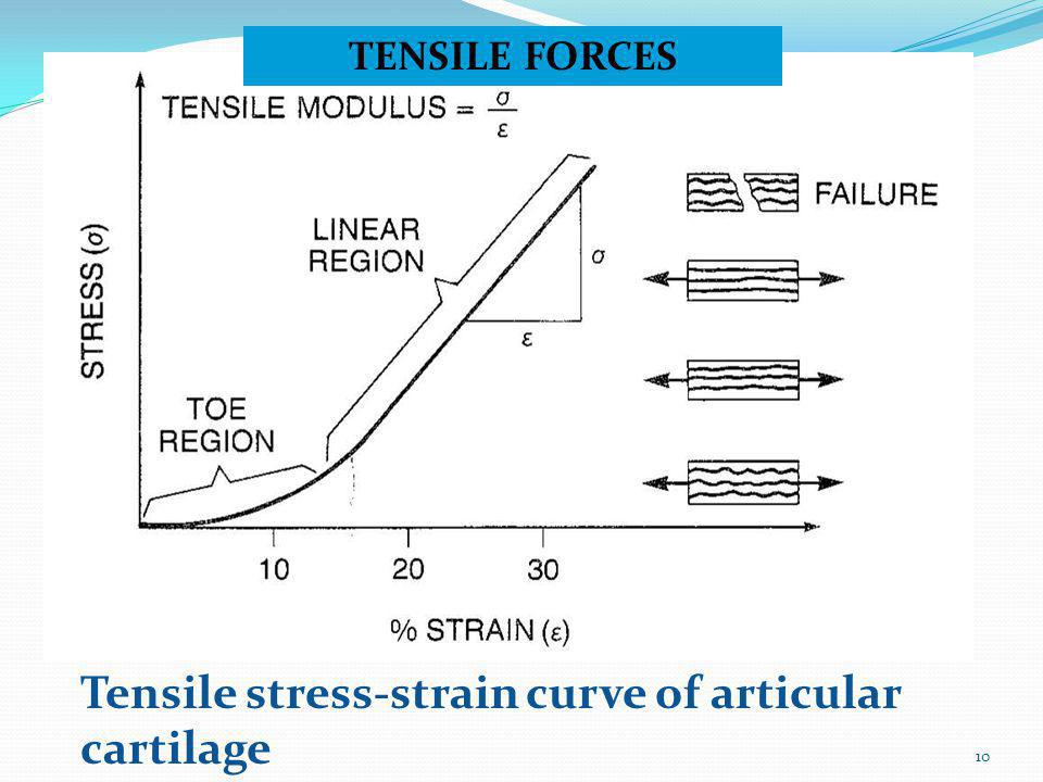 Tensile stress-strain curve of articular cartilage