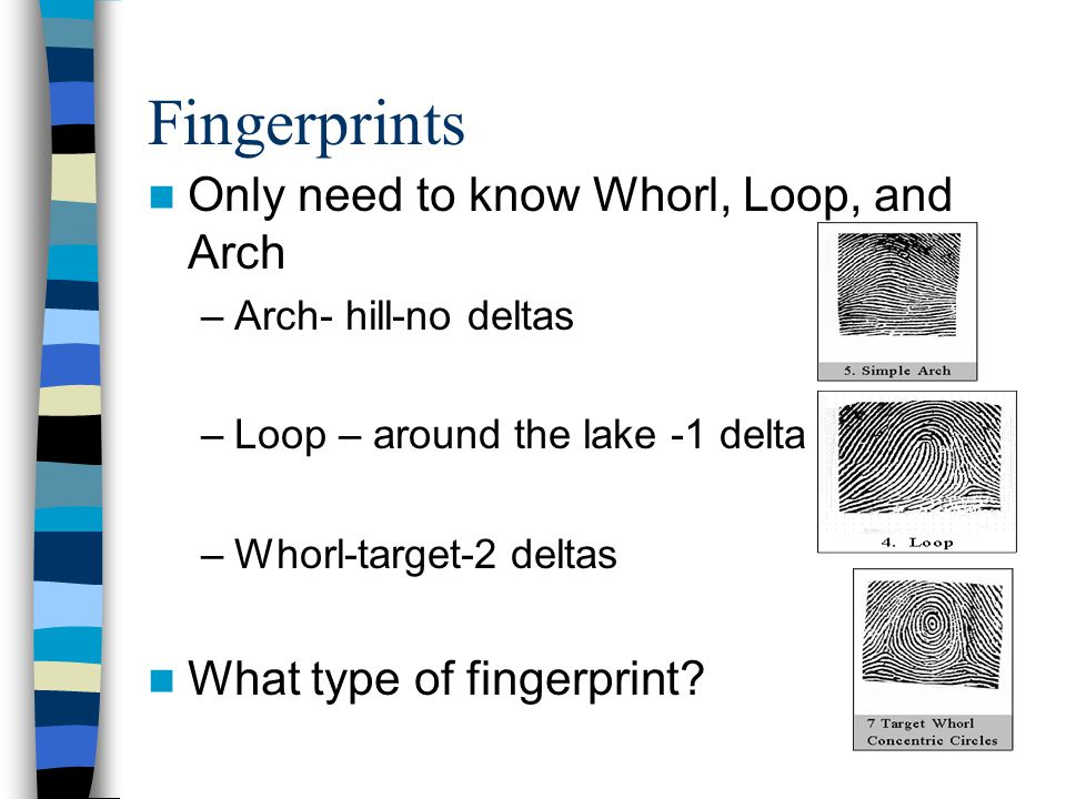Fingerprints Only need to know Whorl, Loop, and Arch