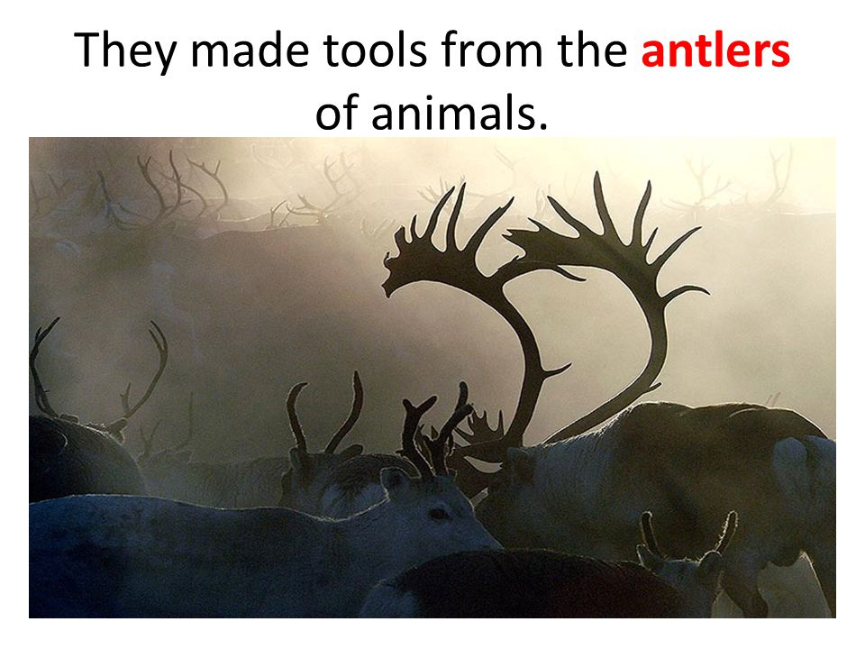 They made tools from the antlers of animals.