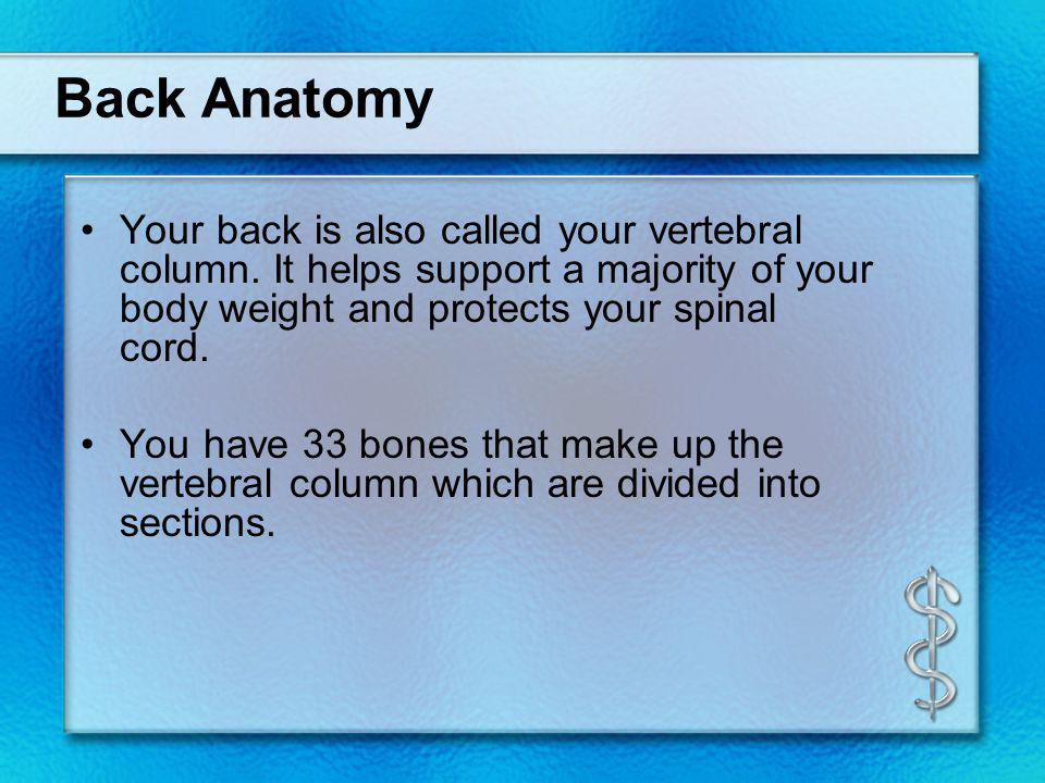 Back Anatomy Your back is also called your vertebral column. It helps support a majority of your body weight and protects your spinal cord.
