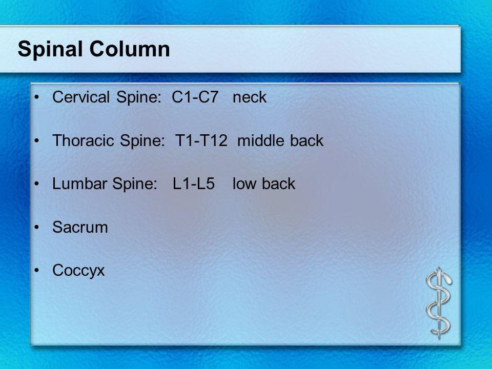 Spinal Column Cervical Spine: C1-C7 neck