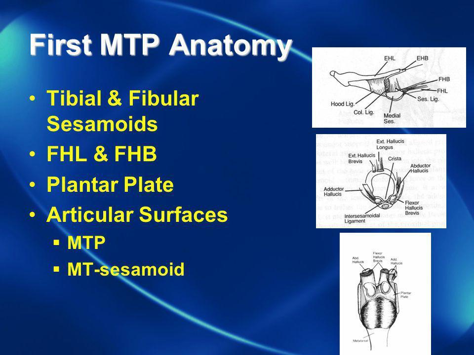 First MTP Anatomy Tibial & Fibular Sesamoids FHL & FHB Plantar Plate