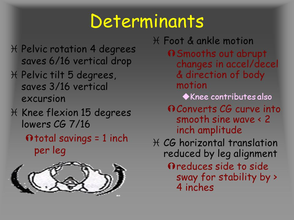 Determinants Foot & ankle motion