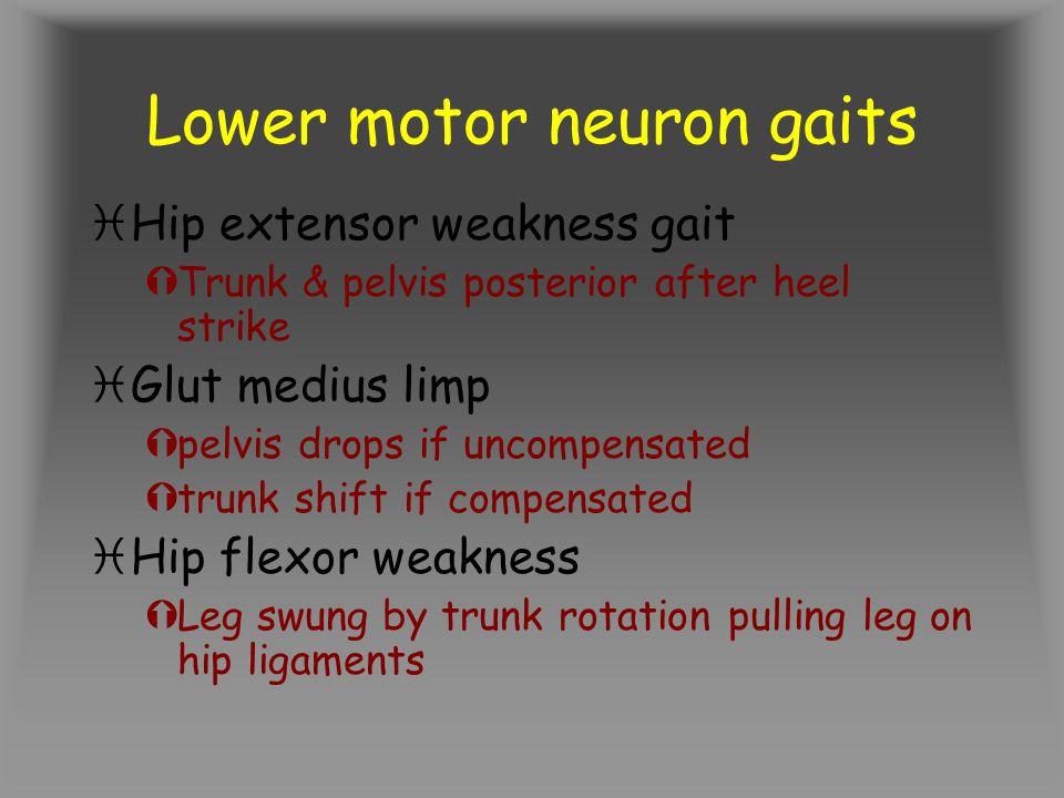 Lower motor neuron gaits