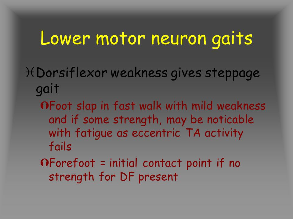 Lower motor neuron gaits