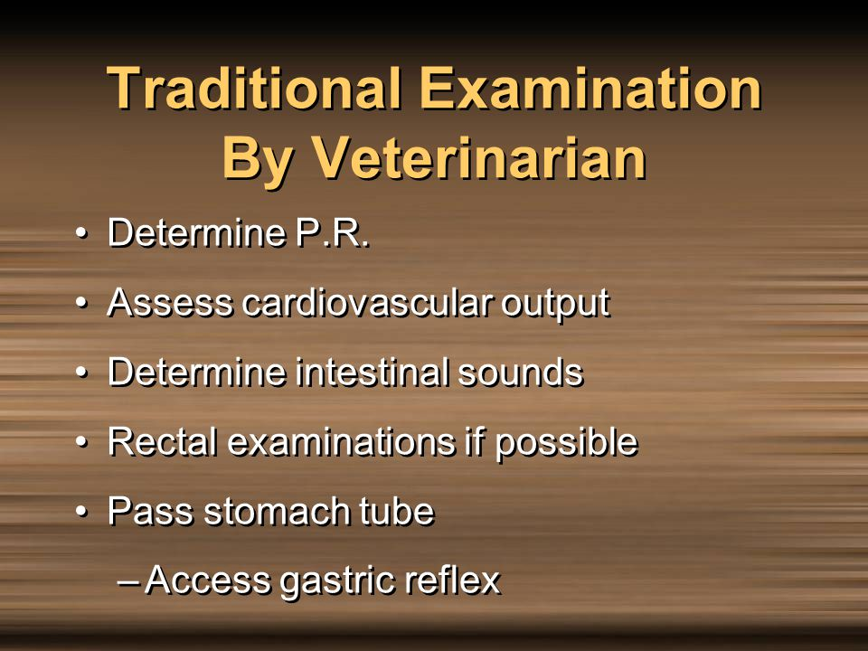 Traditional Examination By Veterinarian
