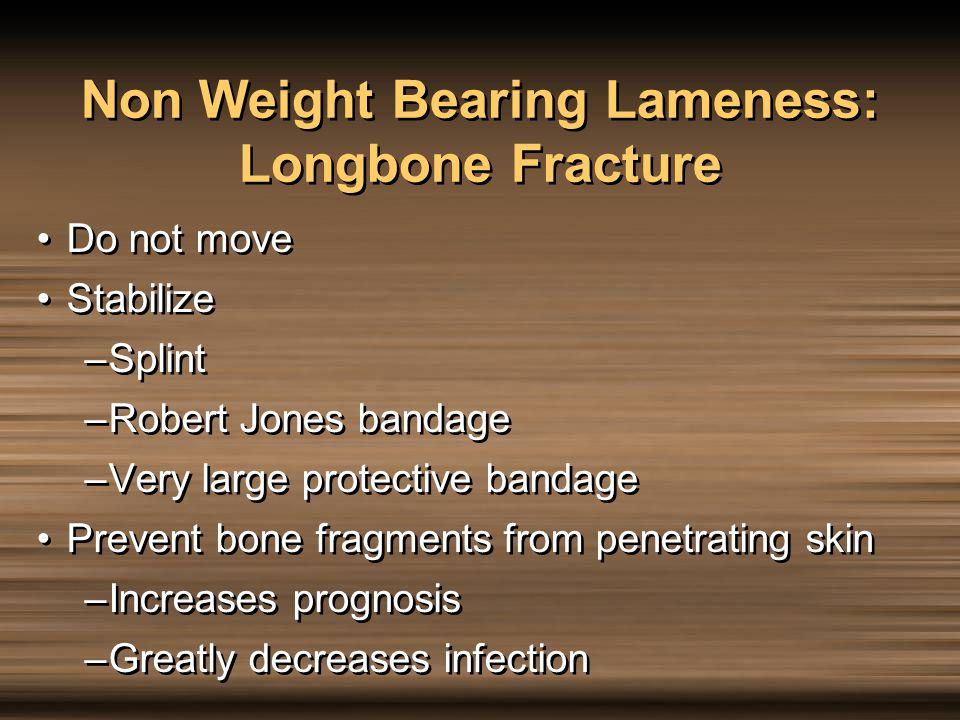 Non Weight Bearing Lameness: Longbone Fracture