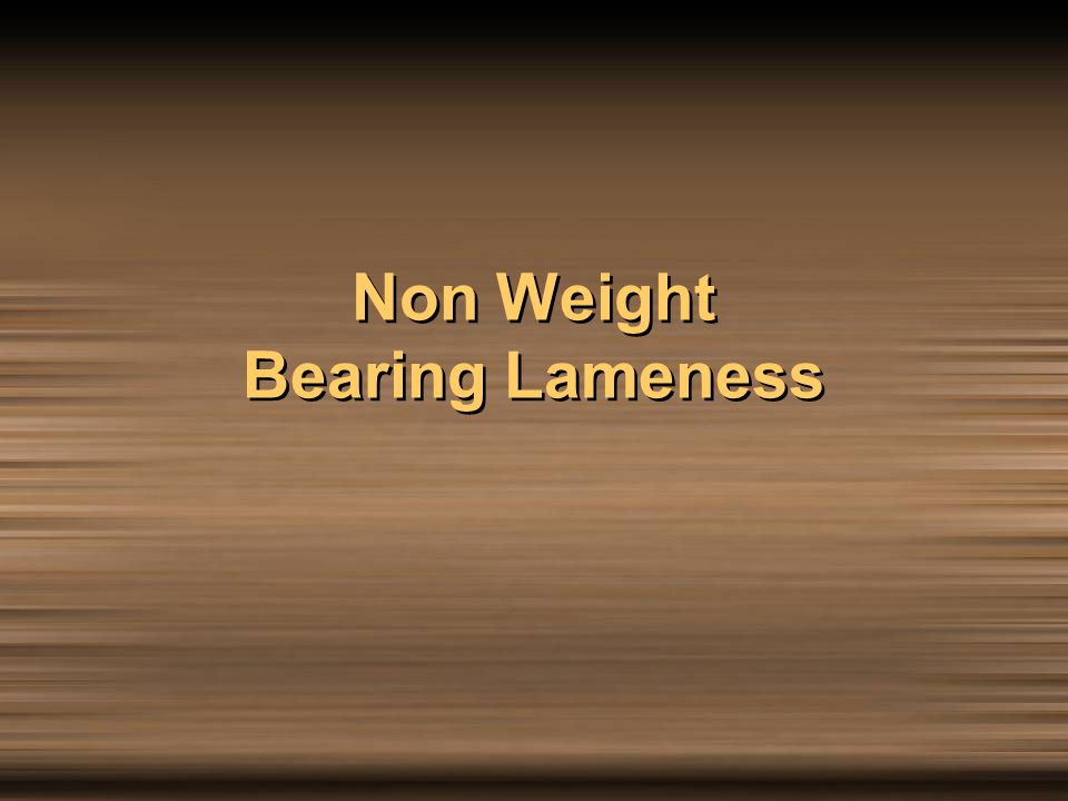 Non Weight Bearing Lameness