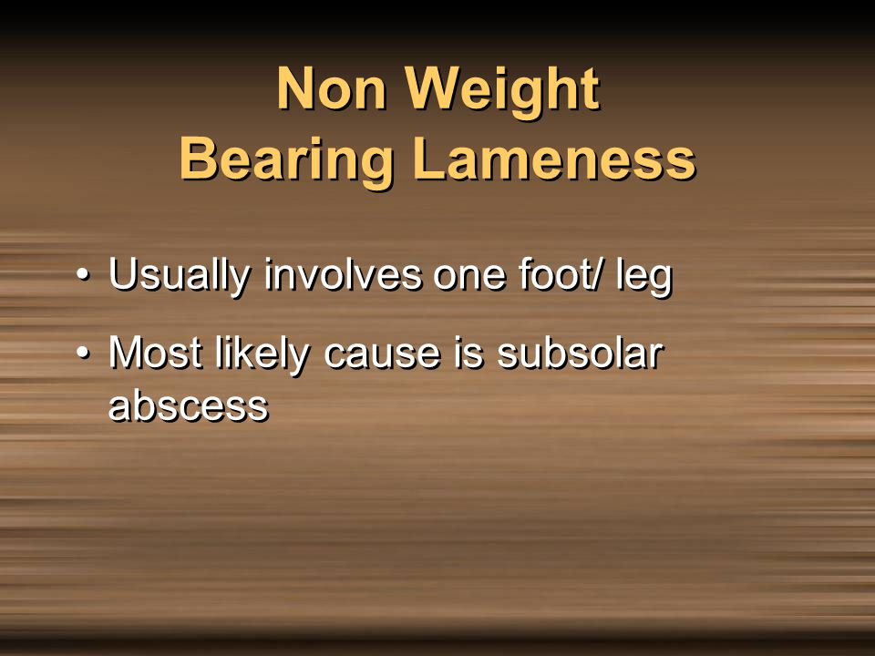 Non Weight Bearing Lameness