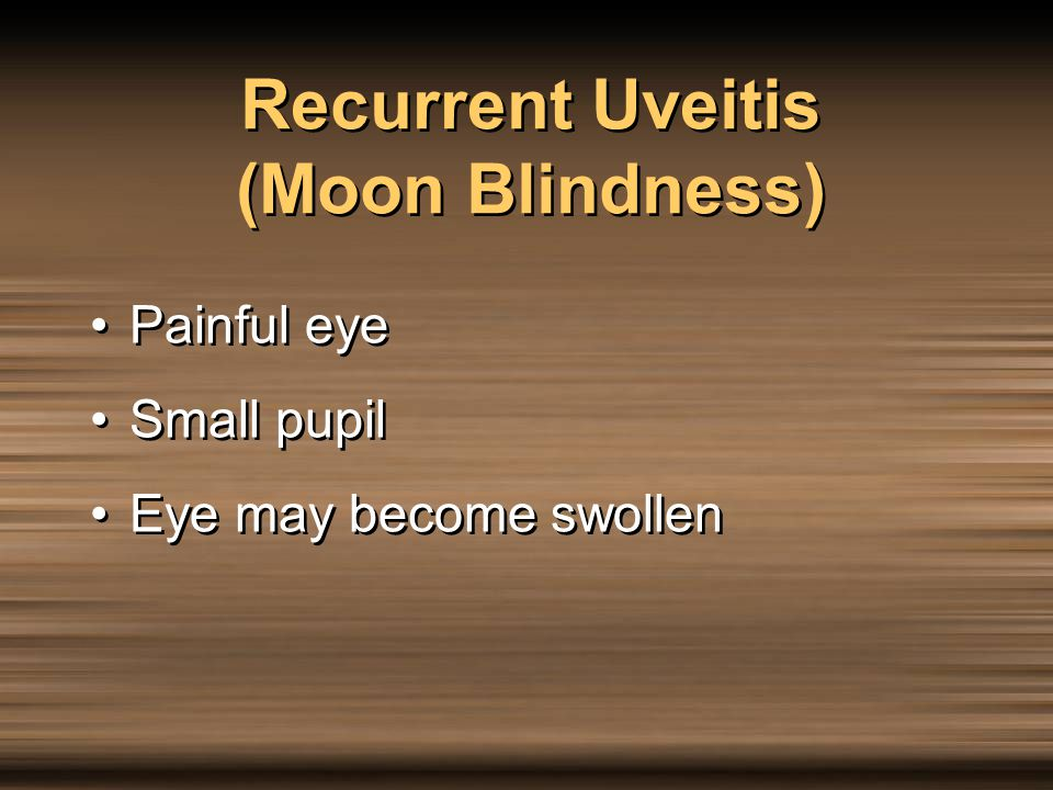 Recurrent Uveitis (Moon Blindness)