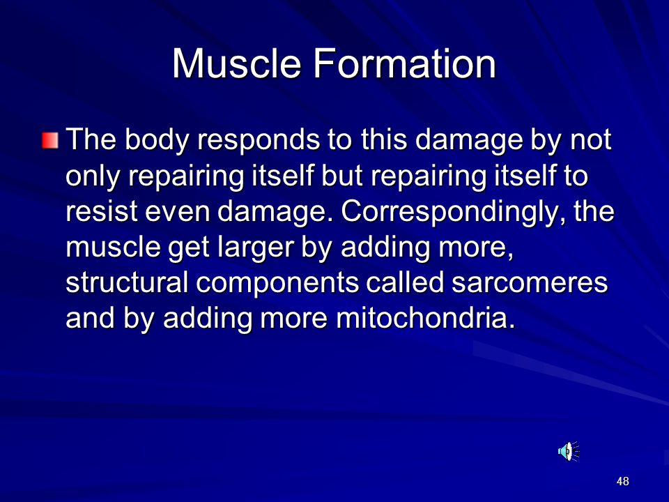 Muscle Formation