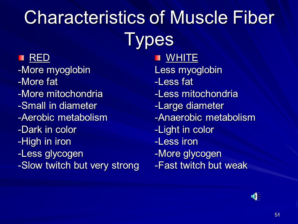Characteristics of Muscle Fiber Types
