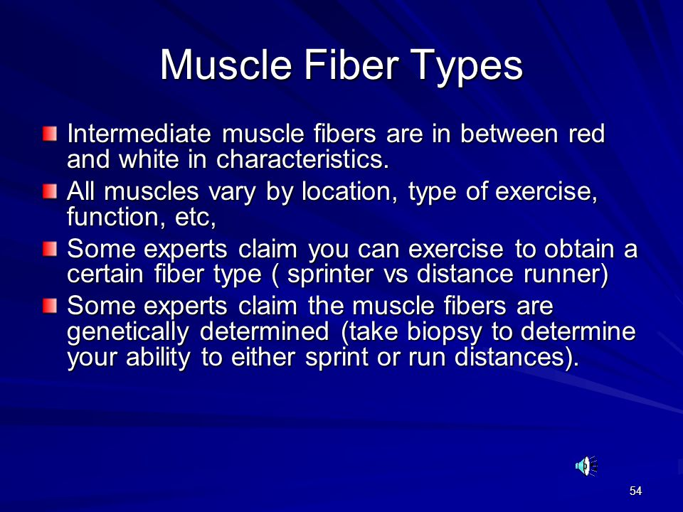 Muscle Fiber Types Intermediate muscle fibers are in between red and white in characteristics.