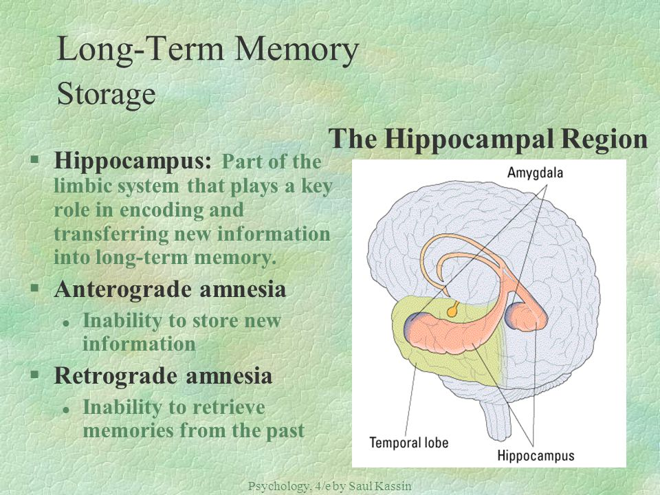 Long-Term Memory Storage The Hippocampal Region