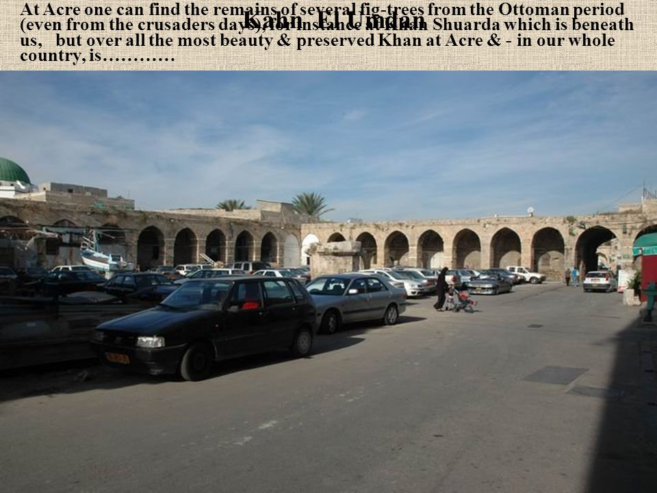 At Acre one can find the remains of several fig-trees from the Ottoman period (even from the crusaders days), for instance at Khan Shuarda which is beneath us, but over all the most beauty & preserved Khan at Acre & - in our whole country, is…………