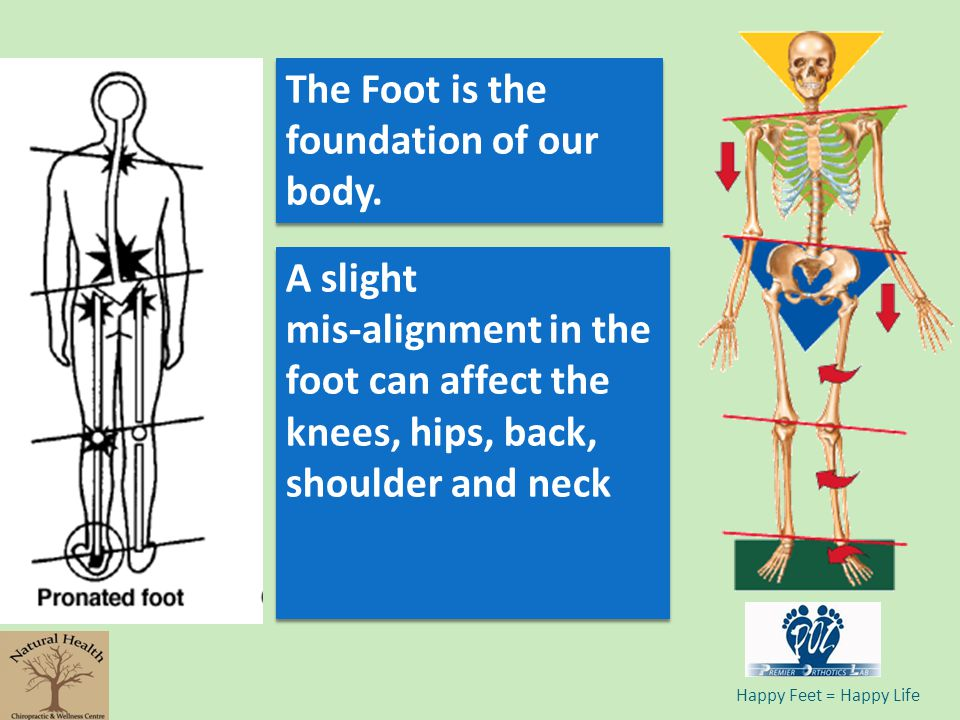 The Foot is the foundation of our body.