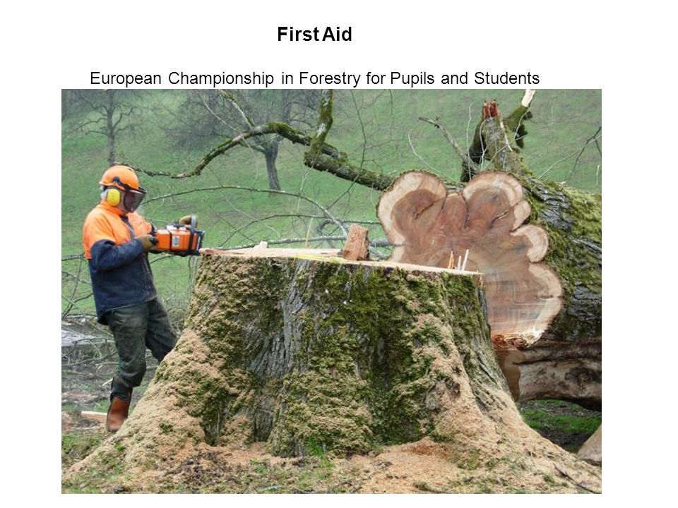 European Championship in Forestry for Pupils and Students