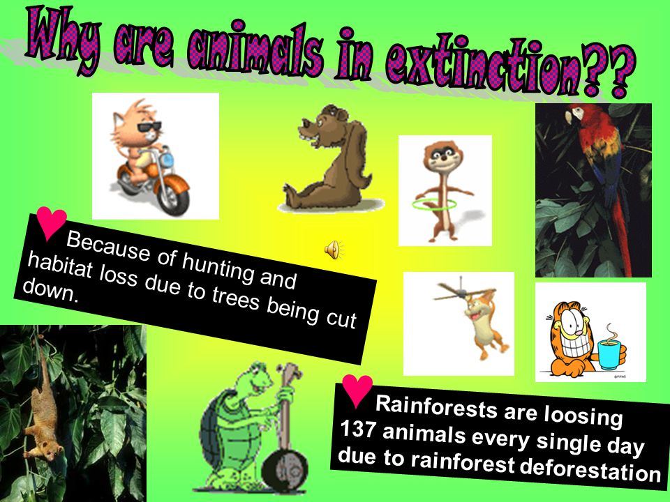 Why are animals in extinction