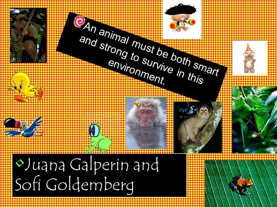 Juana Galperin and Sofi Goldemberg