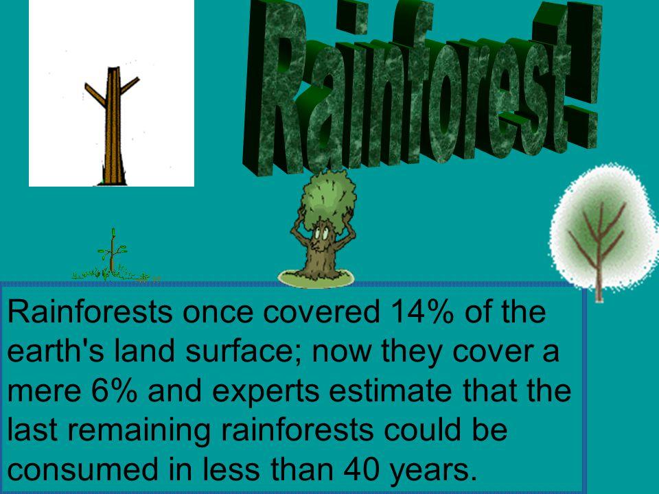 Rainforest !
