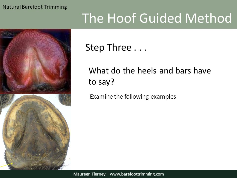 What do the heels and bars have to say Examine the following examples