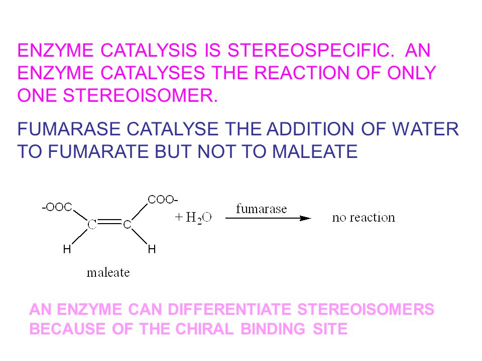 FUMARASE CATALYSE THE ADDITION OF WATER TO FUMARATE BUT NOT TO MALEATE