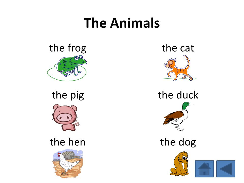 The Animals the frog the pig the hen the cat the duck the dog