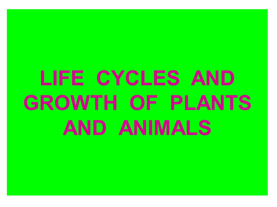 LIFE CYCLES AND GROWTH OF PLANTS AND ANIMALS