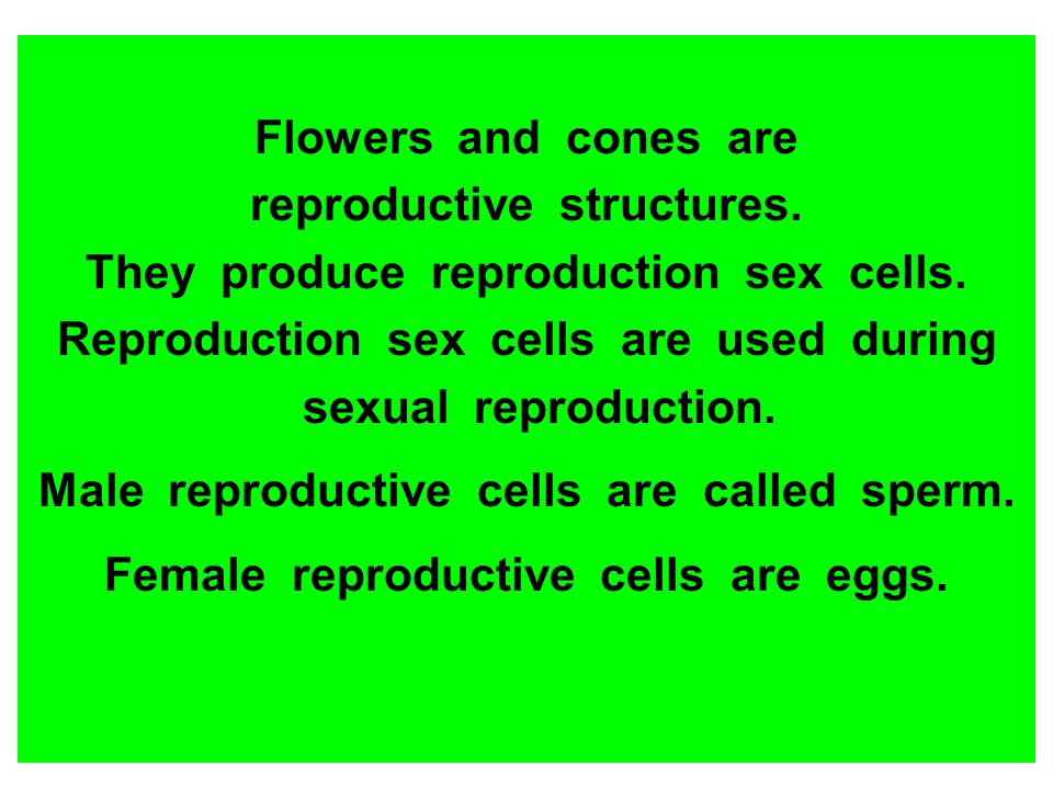 reproductive structures. They produce reproduction sex cells.