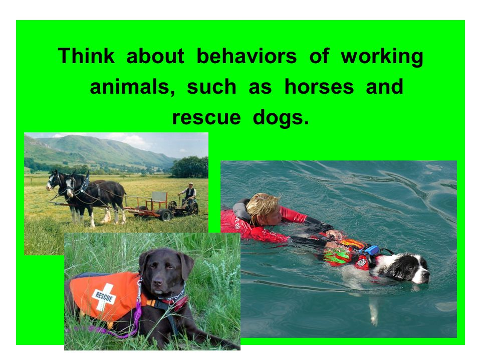 Think about behaviors of working animals, such as horses and