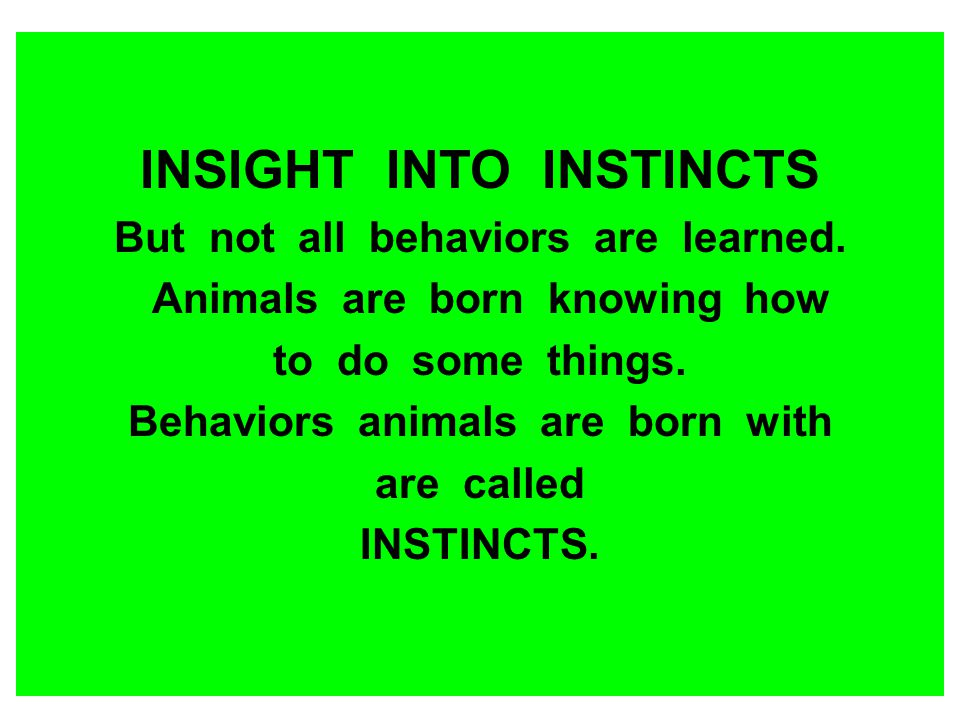 INSIGHT INTO INSTINCTS