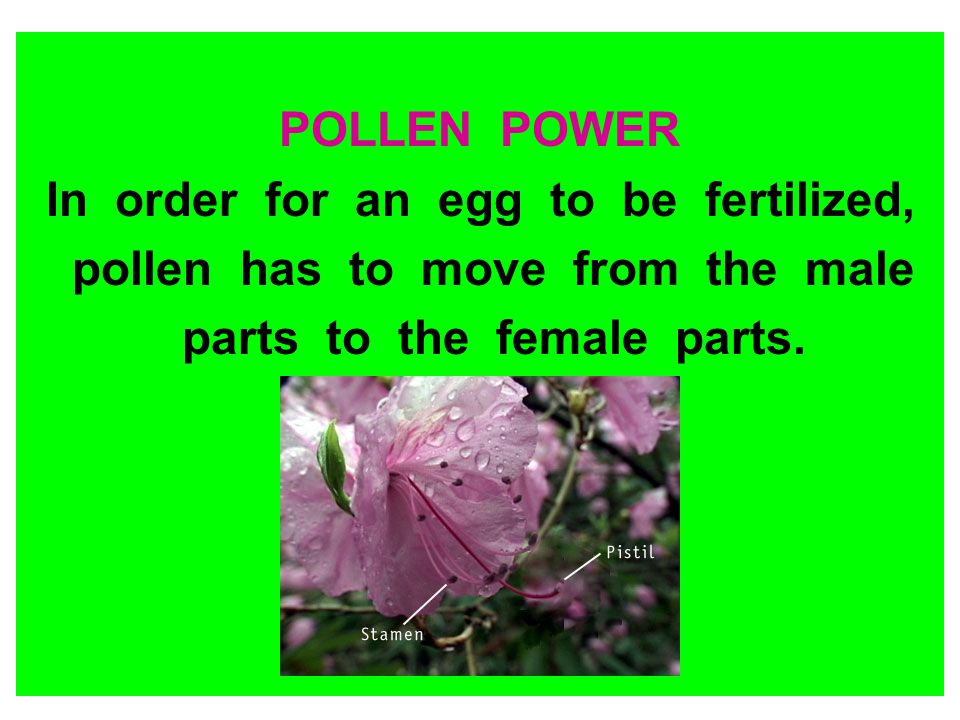 In order for an egg to be fertilized, pollen has to move from the male
