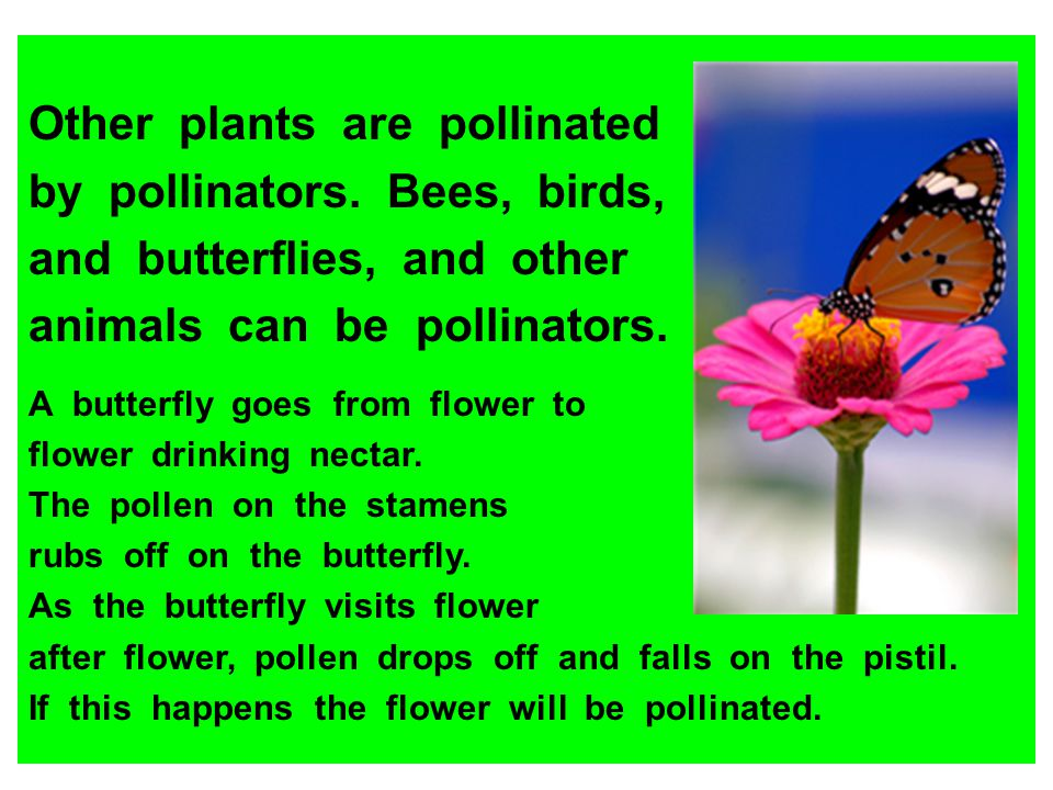 Other plants are pollinated by pollinators. Bees, birds,