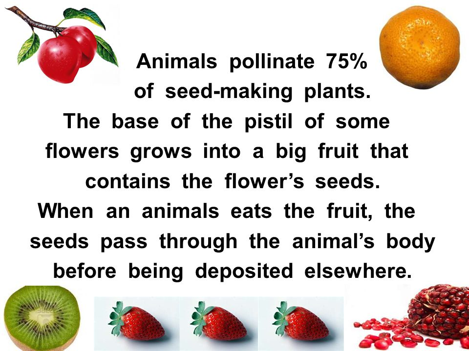 The base of the pistil of some flowers grows into a big fruit that