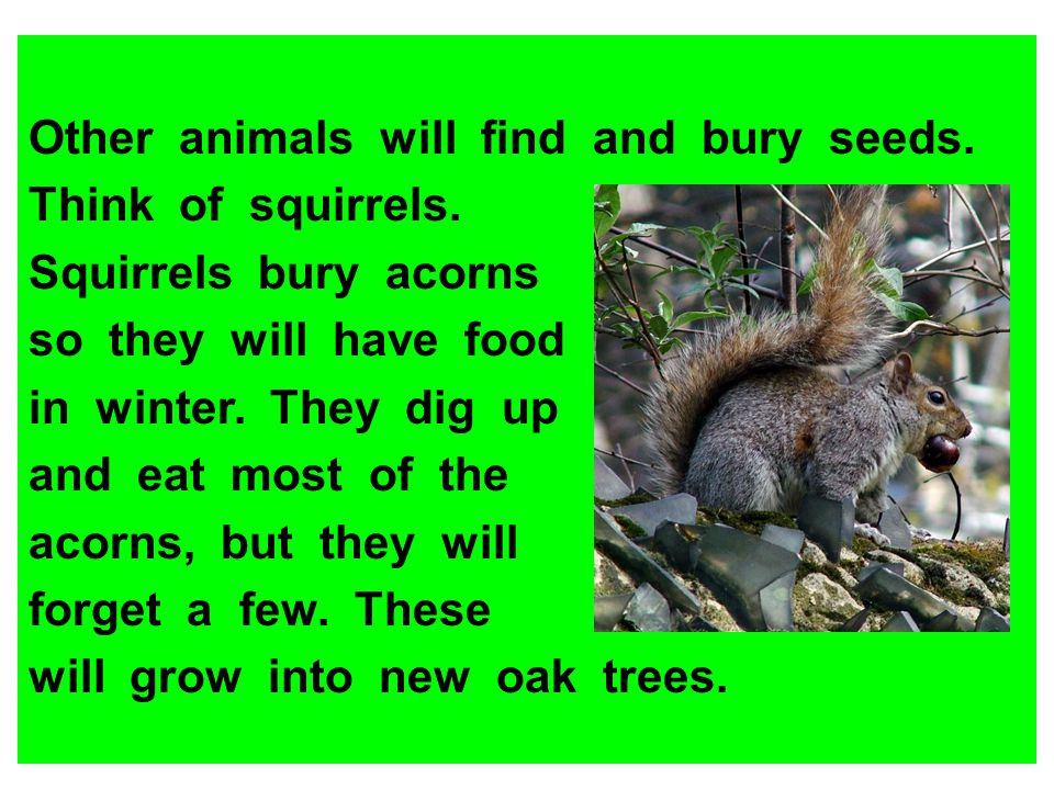 Other animals will find and bury seeds.