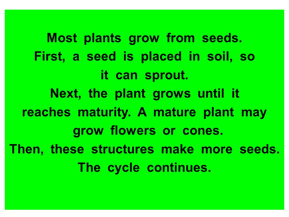 Most plants grow from seeds. First, a seed is placed in soil, so